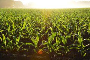 Usługi rolnicze stają się coraz popularniejsze
